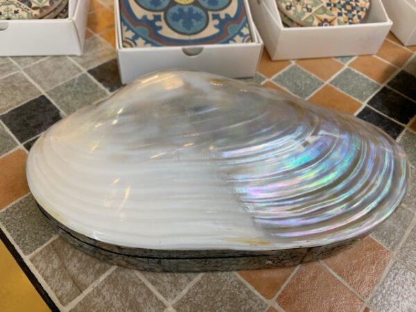 Caja realizada en nácar y una concha marina. 22 cms aprox